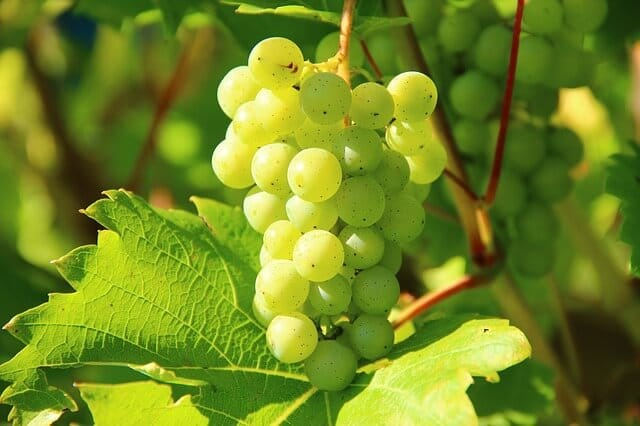Temperatur Weißwein